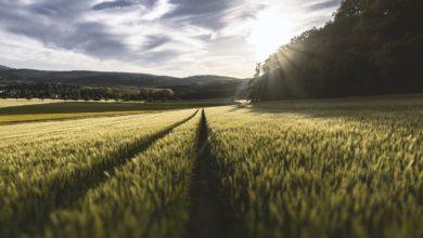 Rolnictwo ekologiczne - co to takiego?