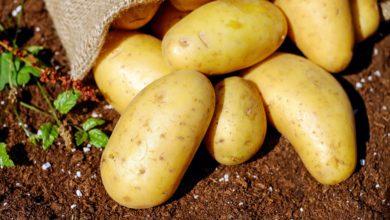 Aminokwasy i ich rola w rolnictwie