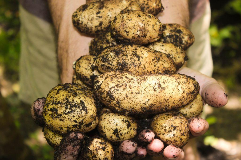 Dikwat wycofany - co to oznacza dla producentów ziemniaków?