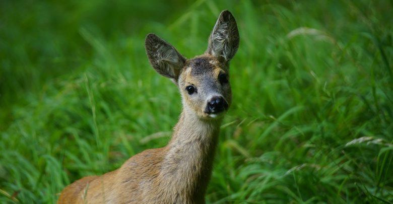 Ochrona upraw - preparaty do odstraszania dzikiej zwierzyny