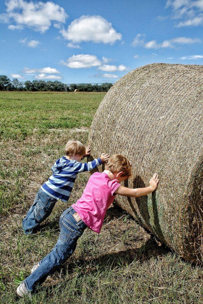Lato w gospodarstwie rolnym