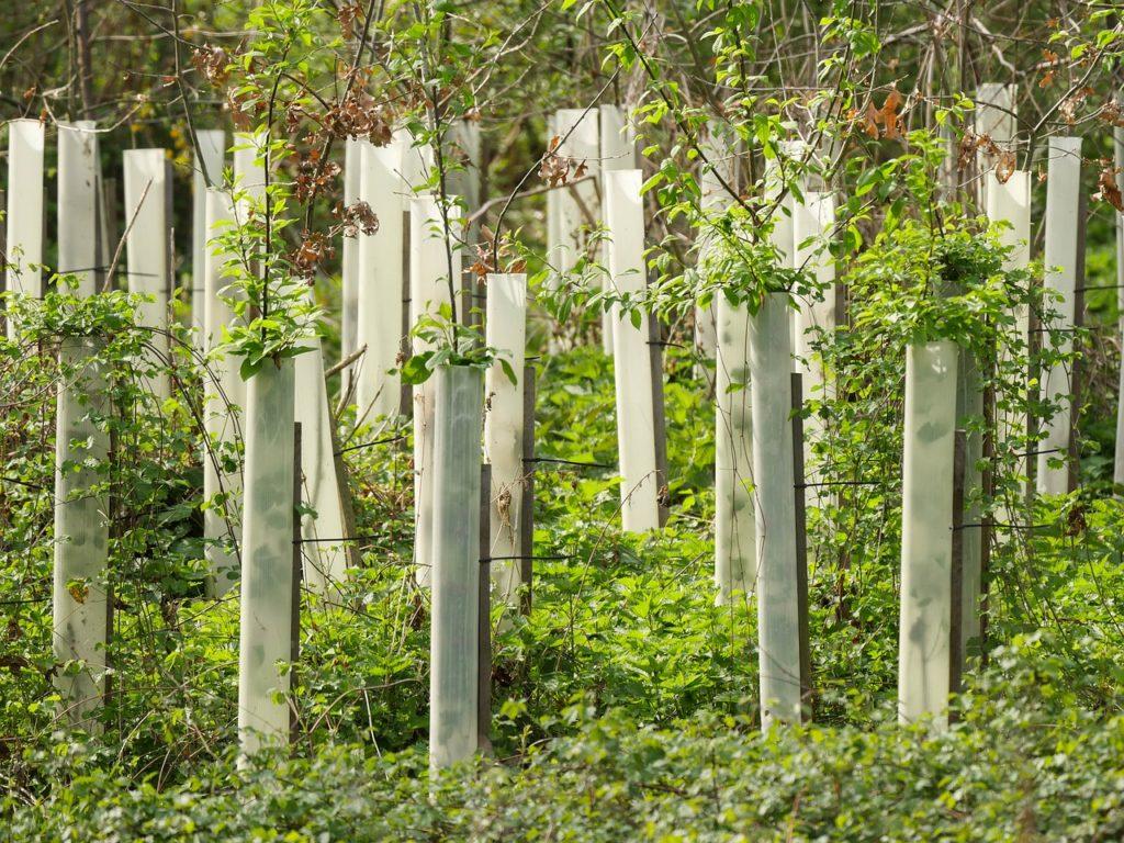 Taśma stabilizująca - mocowanie i formowanie drzew