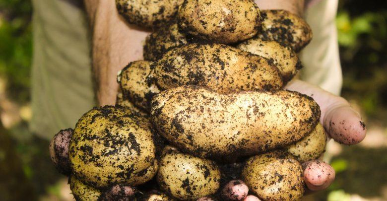 Wzrost ceny ziemniaków w 2019